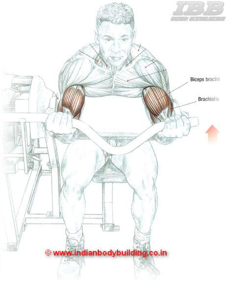 Biceps Workout Machine Curls