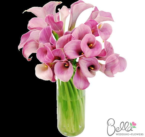 Pink/lavender mini calla lilies have exceptionally pretty trumpet-shaped blooms with a hint of a wavy edge. Their gorgeous color and sleek lines look spectacular in hand tied bouquets and mix well with other types of wedding flowers. Although they may look delicate and graceful, mini calla lilies are actually quite hardy flowers, making them especially easy to work with. As always, our pink/lavender mini callas are shipped directly from the grower. Take advantage of our Free Shipping. $79