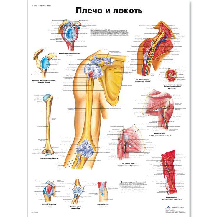 144 best 070_ ANATOMY (СКЕЛЕТ) images on Pinterest | Body joints ...