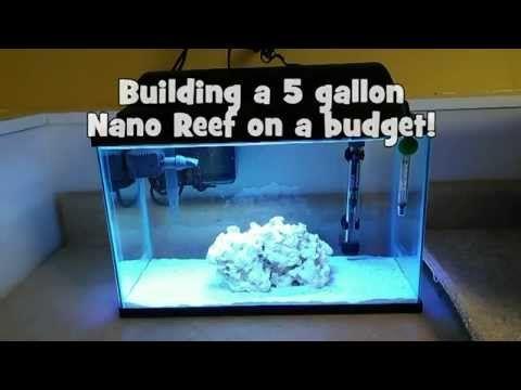 Building a 5 gallon Nano Reef on a budget! - YouTube