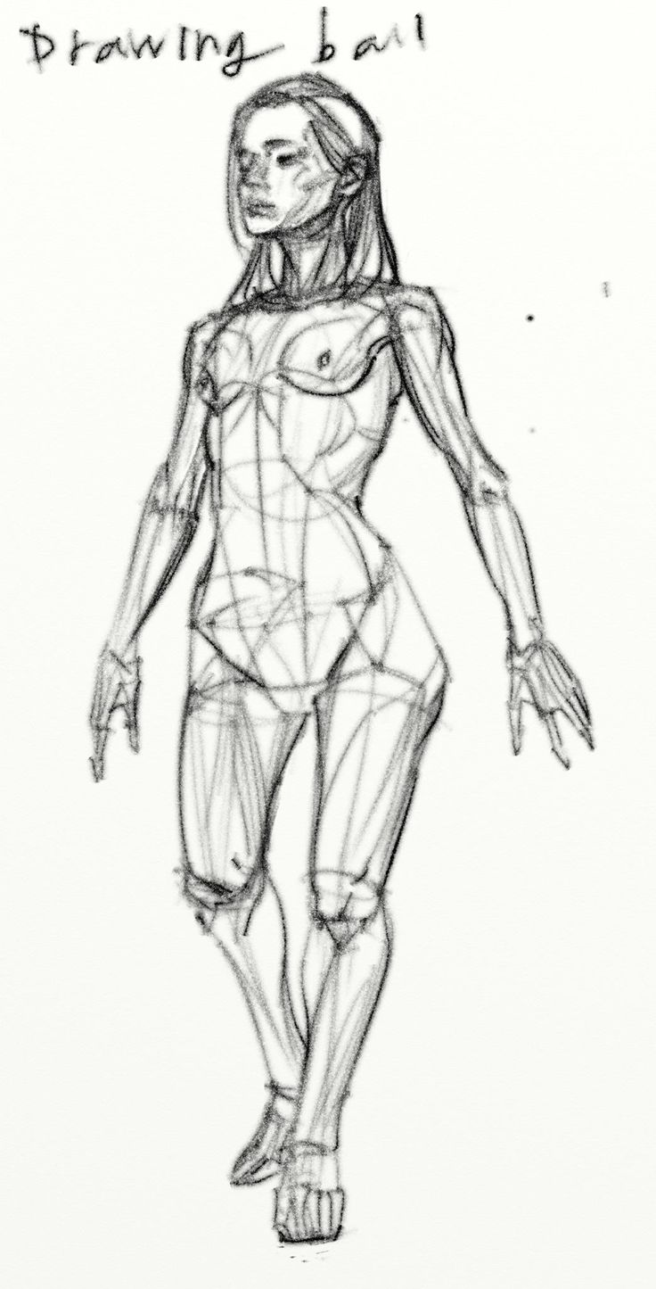503 best ziv`s anatomy board images on Pinterest | Drawing reference ...