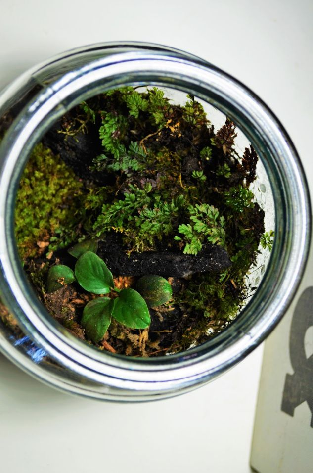 Small forest Terrarium | The Mossy Blogster