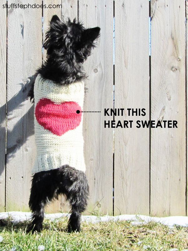 Knitting Dog Clothes : Best images about knitted dog sweater patterns on