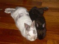 Semola e Ruf: Coniglie in adozione