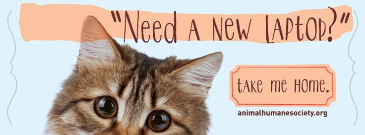 Animal Humane Society's adoption Facebook banner