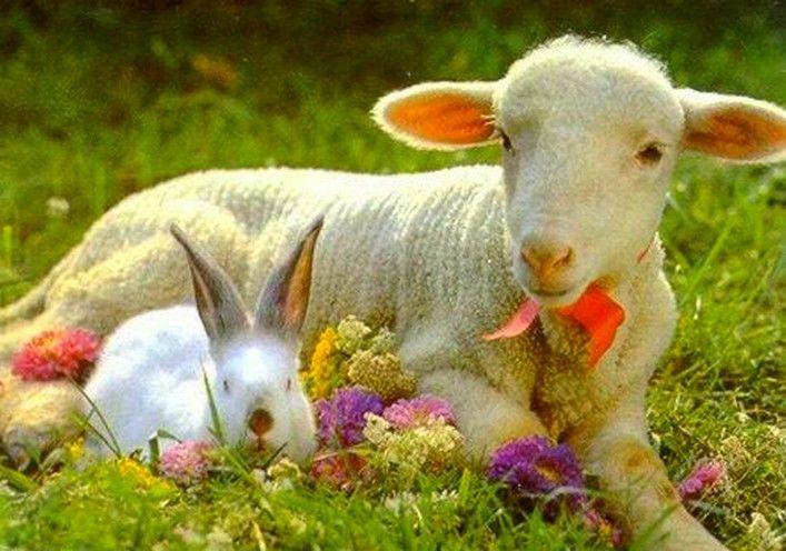 """V západní křesťanské tradici neděle Zmrtvýchvstání připadá na první neděli po prvním jarním úplňku po rovnodennosti, tedy na měsíc březen či duben (viz Výpočet data Velikonoc). Slovanský název svátku, Velikonoce, se vztahuje na """"velkou/velikou noc"""", v níž byl Kristus vzkříšen."""