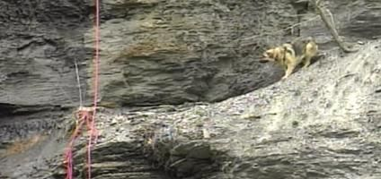 Amazing Photos: Firefighter Rappels Down 200-Foot Cliff to Save a Dog | Dogster