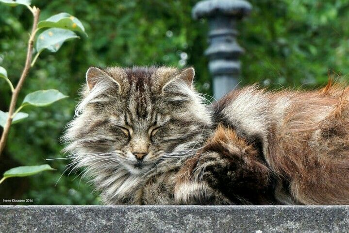 Cat, Leerdam, the Netherlands, by Ineke Klaassen on Flickr.com.