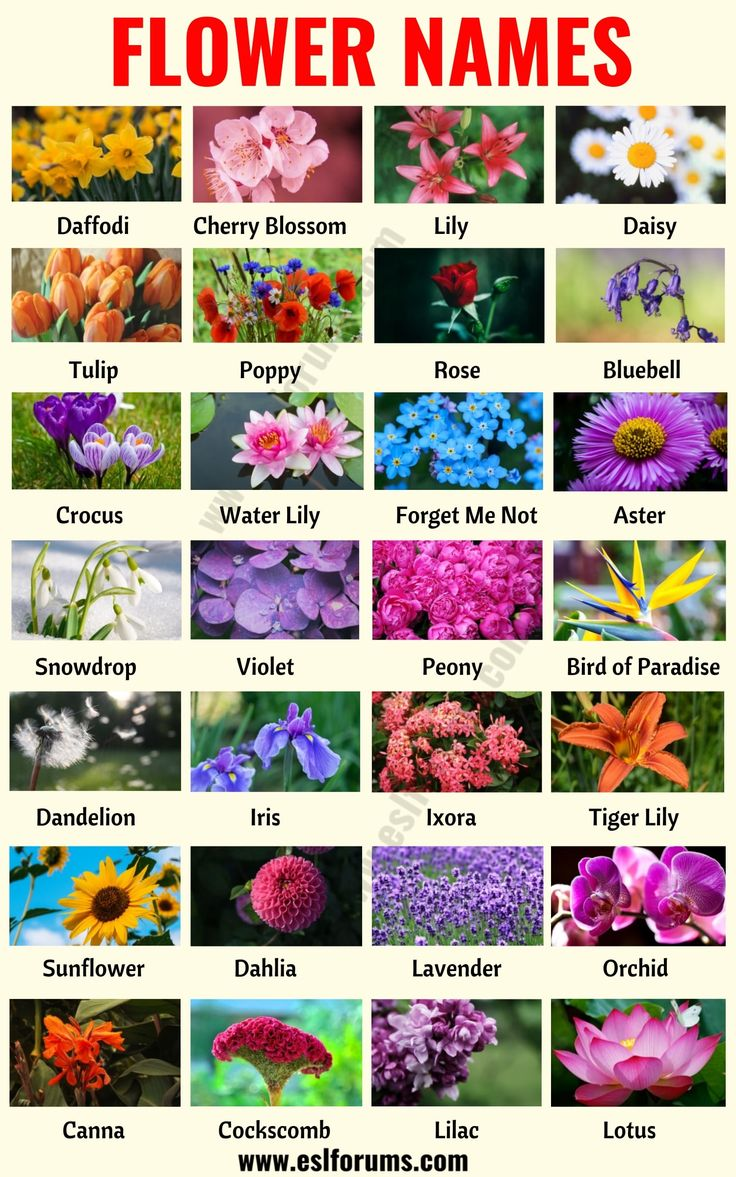 Flower Names List of 25+ Popular Types of Flowers with