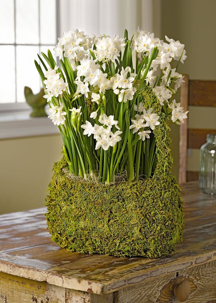Paperwhite Bulbs In A Gift Basket   Inbal Variety | Gardeners.com