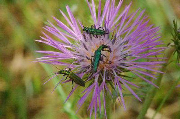 """Los insectos son también una parte importante del ciclo de nutrientes del ecosistema del bosque húmedo tropical. Los biólogos llamaron a estos grupos de animales """"artrópodos"""", un nombre científico señalando las articulaciones de las piernas y exoesqueleto duro. Son criaturas importantes porque comen hojas, residuos de hojas y animales. Muchos animales basan su alimentación en los artrópodos. Algunos artrópodos al igual que los cortadores de hojas, estimulan el crecimiento de la nueva planta…"""