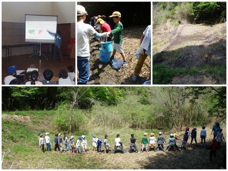 【自然再生バケツリレー再び!】 4月30日、奈良市野外活動センター裏の放棄水田において、自然再生をしました。小学生約25名&学生・大人5名が参加。 泥を堀り、バケツをリレーし、堤を積み上げ、あぜを塗り、約45分間で約6mのあぜが完成しました! 今回も、このフィールドワークが生きものたちのすみかを創るための作業の一環であり科学的な理論に基づく自然再生の手段である、というレクチャーを事前に受けています。 前回に続いての参加の子供もおり、「服汚してお母さん洗うの大変やろうけど、これ、仕事やから!」という声が! この企画の成果が着実に挙がってきているようすが伺われました。