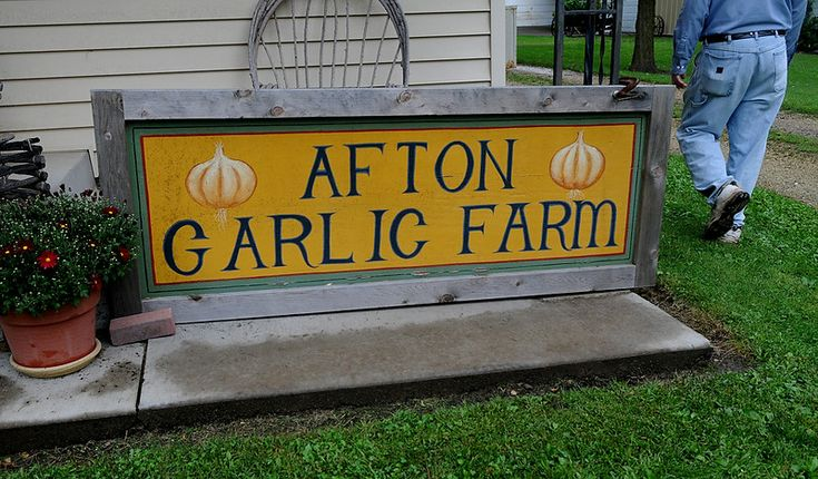 Mike Hicks sells his garlic out of his Afton farmhouse.  (Pioneer Press: Jean Pieri)