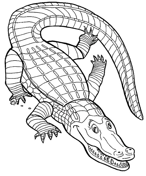 43 best Crocodiles images on Pinterest Crocodile Coloring and Kids