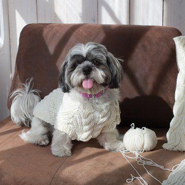 Un pull pour chien en tricot
