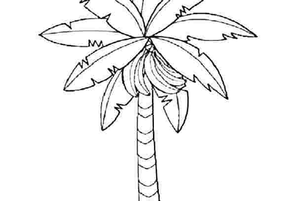 Coloring Festival Banana Tree Coloring Pages More Than 100