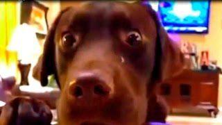 Смотреть онлайн видео funny dogs and cats videos: Смешные собаки 2014-смешное видео про собак 2014