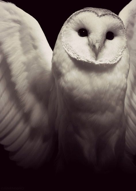 My grandmas favorite owl...love them because they make me think of her.