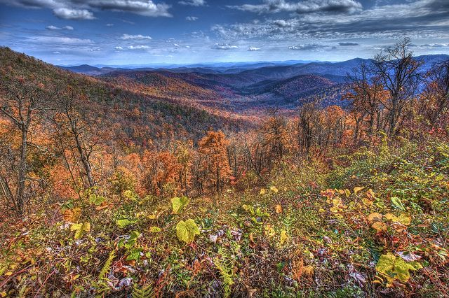 10 best campgrounds in NC: #1 Mount Pisgah Campground