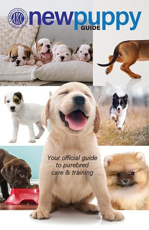 New Puppy Guide New Puppy Dog Daycare Dog Training Treats