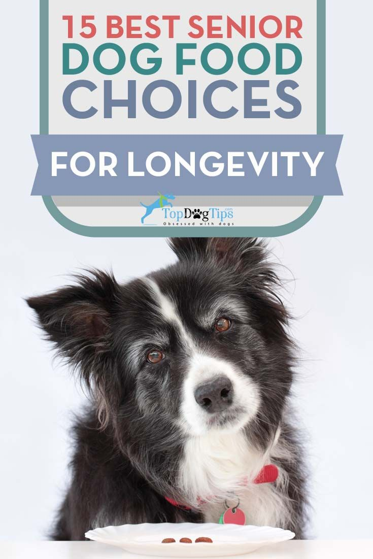 how to help older dog gain weight