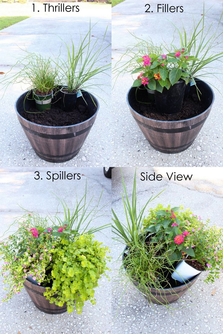 How To Plant a Summer Flower Pot