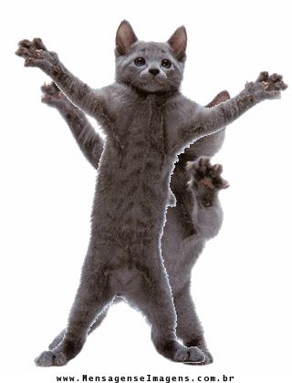 гифка с танцующим котом на прозрачном фоне бесплатную