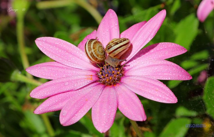 https://flic.kr/p/FMWVx2 | flowers - Spring is here 81 | Spring is here * flowers Spring is here in my heart @