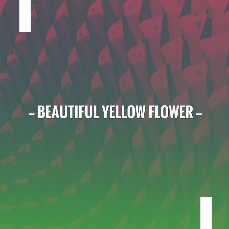 Just posted! Beautiful Yellow Flower http://thebeautyaroundus.blog/2017/08/30/beautiful-yellow-flower/