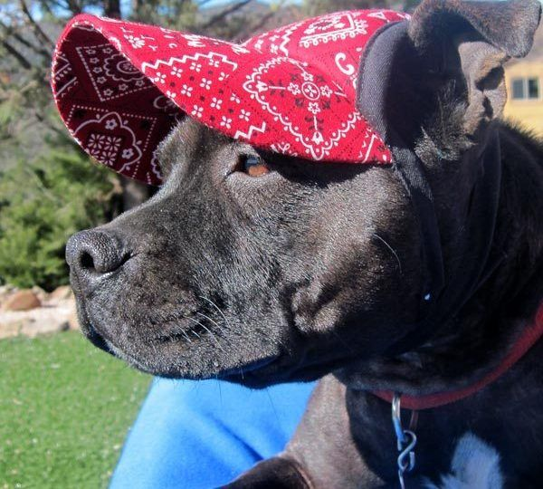 The 14 Best Dog Hats And Dog Visors For The Sunbound Pup Dog Hats Dogs Sun Dogs