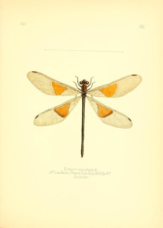 v. 1 - Aid to the identification of insects / London :E.W. Janson,1880-90.