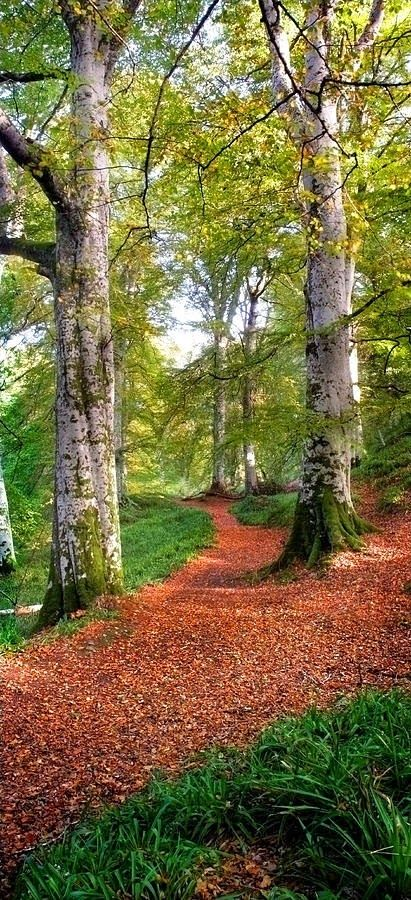 Path in Cawdor Big wood, Scotland