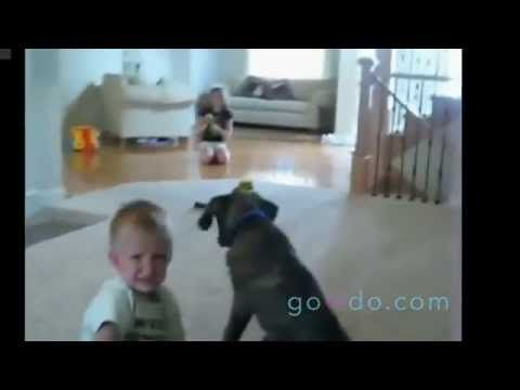 In the wrong place at the wrong time ::: Dog ::: Best Funny Animal Videos ::: Visit us on www.govido.com to find THE FUNNIEST ANIMAL VIDEOS 2014 Funny Videos, Funny video 2014: cat, cats, dog, dogs, funny dogs, sweet dogs, animal, cute, pets, funny animals, puppies, PLUS: monkey, frog, kangaroo, buffalo, deer, bear, fish, ... and more! Hilarious short videos to make you laugh! :::