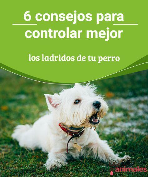 6 consejos para controlar mejor los ladridos de tu perro En el siguiente artículo os damos algunos consejos para controlar los ladridos de tu perro cuando son excesivos o no tienen un motivo aparente. #control #ladridos #adiestramiento #consejos
