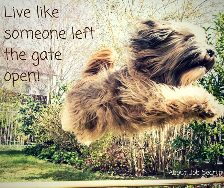 Live Like Someone Left The Gate Open Quote: 17 Best Images About Things We Like On Pinterest