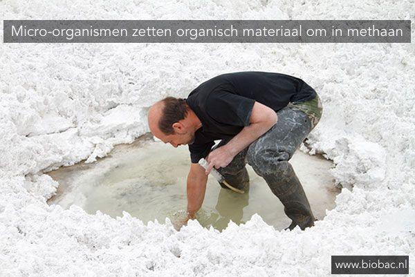Onderzoekers uit Delft en Moskou hebben een nieuwe klasse micro-organismen ontdekt in Siberische sodameren. Deze micro-organismen zetten organisch materiaal direct om in methaan. 〰 https://biobac.nl/micro-organismen-zetten-organisch-materiaal-om-methaan/