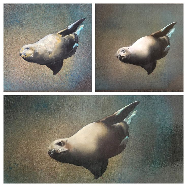 Stages is a small painting By Christine Morton of a sea lion Seen in an aquarium in Alaska. 20x25cm on board.