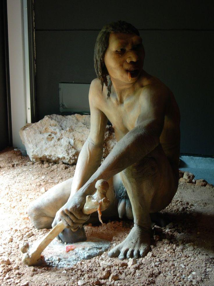 Model of a male Homo antecessor of Atapuerca mountains (Ibeas Museum, Burgos, Spain)