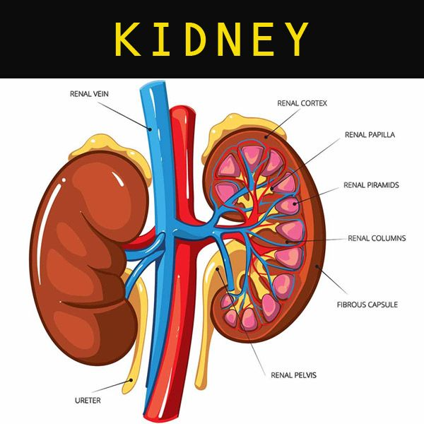 #StemCellTherapy for #Diseases #Kidney #Liver #Heart #StemCells #India #Treatment #StemCellTreatment #Pakistan #USA #UK #Britain Skype: Advancells.India www.advancells.com +91 - 9654321400