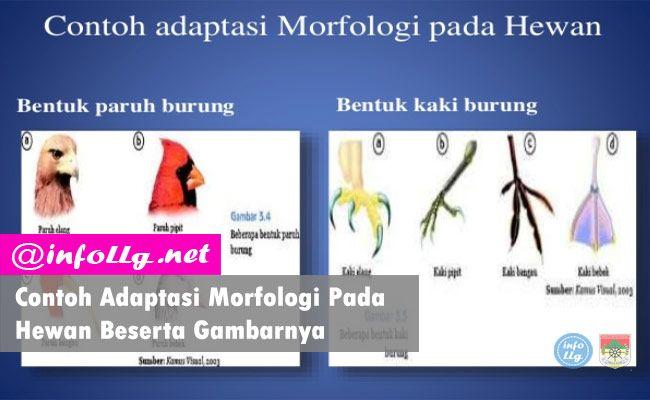 Contoh Adaptasi Morfologi Pada Hewan Beserta Gambarnya Http Www Infollg Net 2018 01 Contoh Adaptasi Morfologi Pada Hewan Beserta Gamba Adaptasi Hewan Gambar