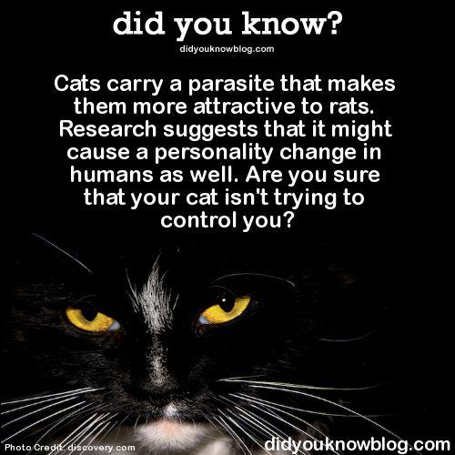 Parasite That Makes Humans Love Cats