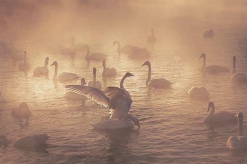 35PHOTO - Купрацевич Дмитрий - Лебединое озеро на рассвете