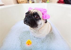 Tante coccole per il tuo cane! A soli 13€ lavaggio, tosatura, taglio unghie e pulizia orecchie!