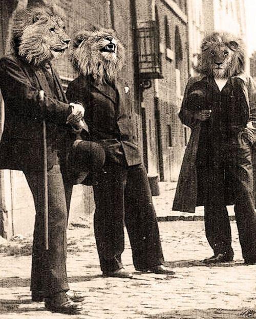 Dandy lions.