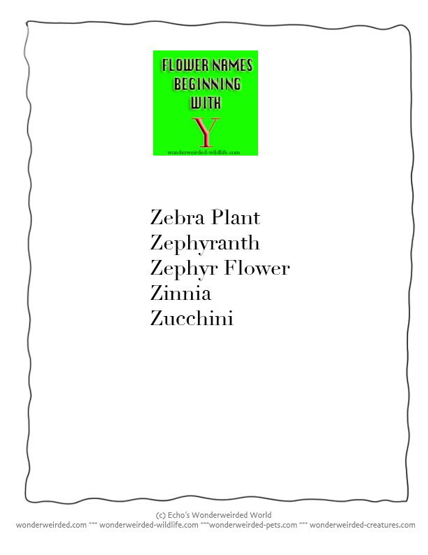 Plants Beginning With The Letter Y