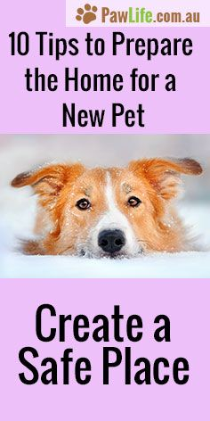 How would you prepare the home for a new pet? Here are some tips.  #dogs #puppy #puppytraining #newpet #housetrainyourdog #newdog