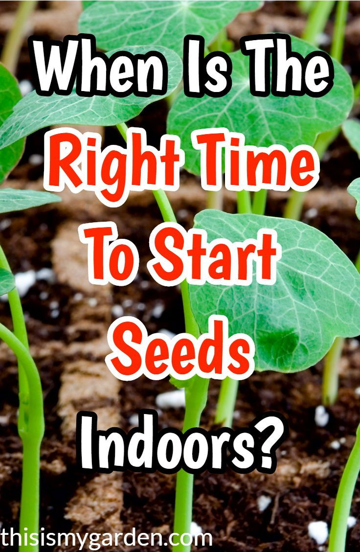 Picking The Right Time To Start Vegetable Seeds Indoors With