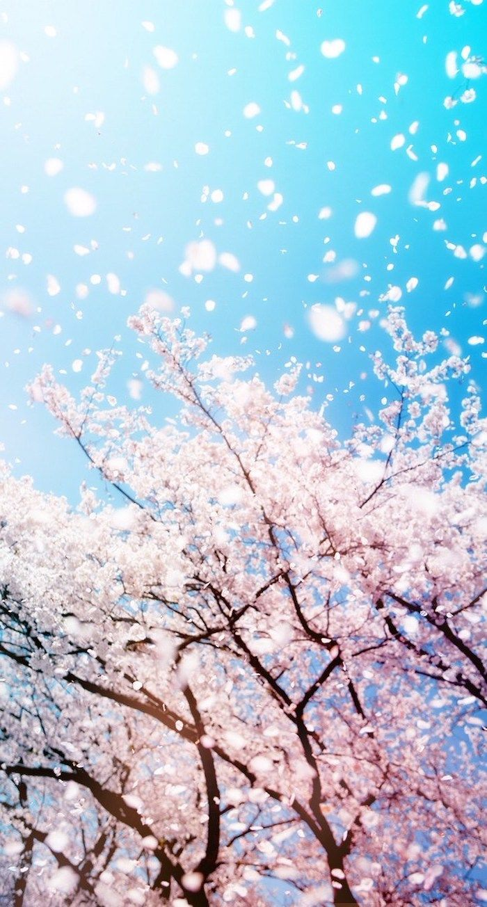 Spring Background Blue Skies Blooming Tree With Blooms Flying Around Phone Wallpaper Spring Wallpaper Winter Wallpaper Nature Iphone Wallpaper