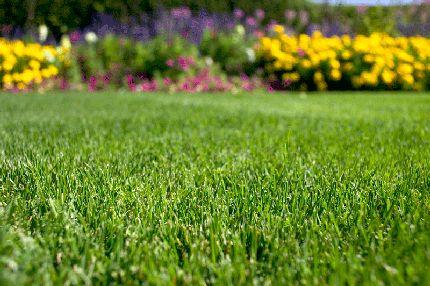 Anlæg din græsplæne