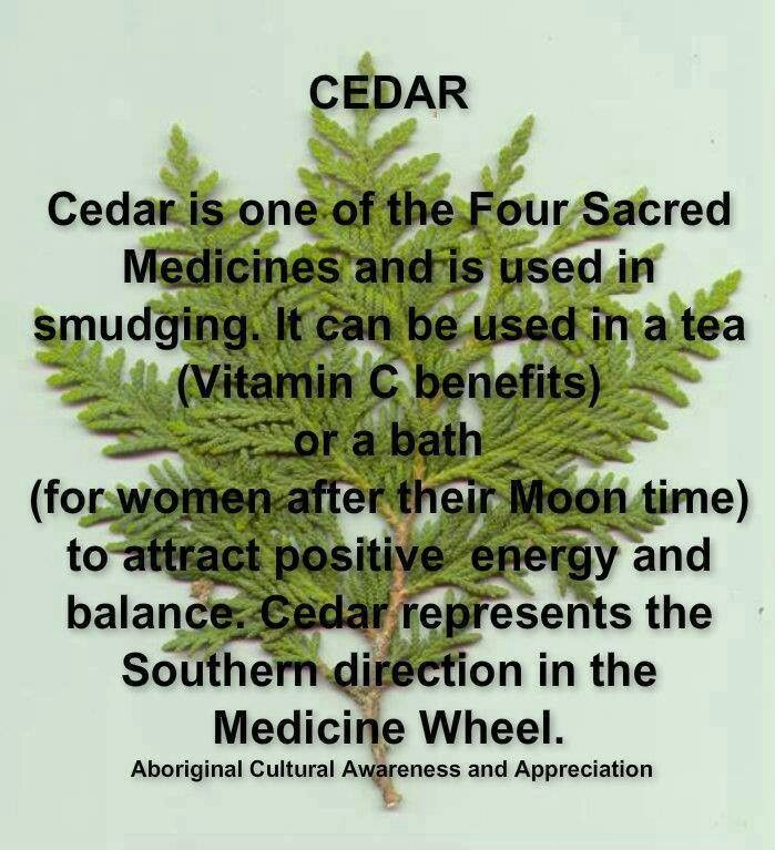 Cedar is One of the Four Sacred Medicines and is Used in Smudging. It Can be…